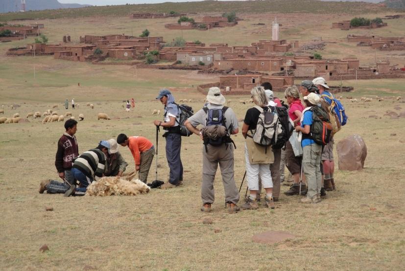 Figure 3 : observation de la tonte des moutons sur le plateau du Yagour et du village d'Ait Ali (M. Oiry Varacca, mai 2010).